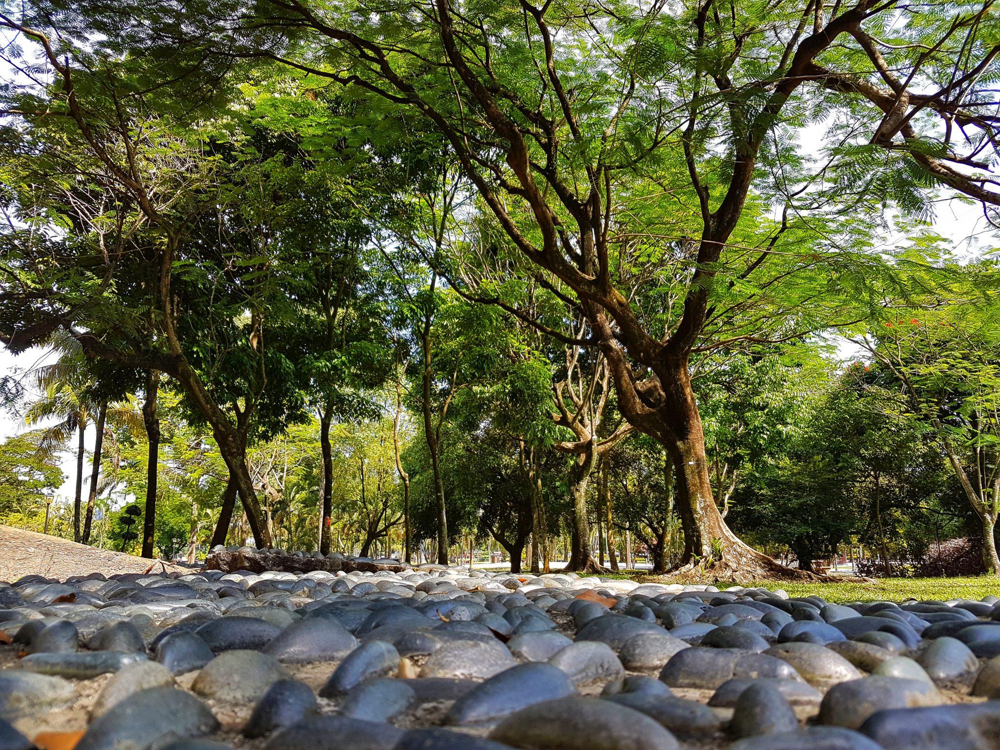 Frøperspektiv af skov ved alternativ behandling